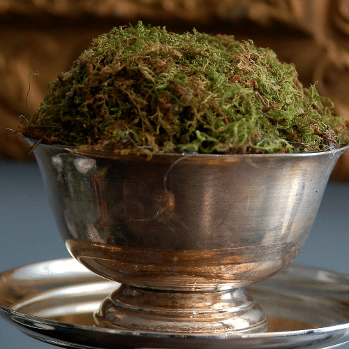 Moss Bowl Topiaries