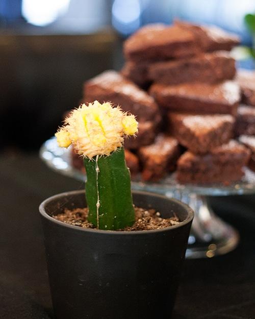 cactus-decor