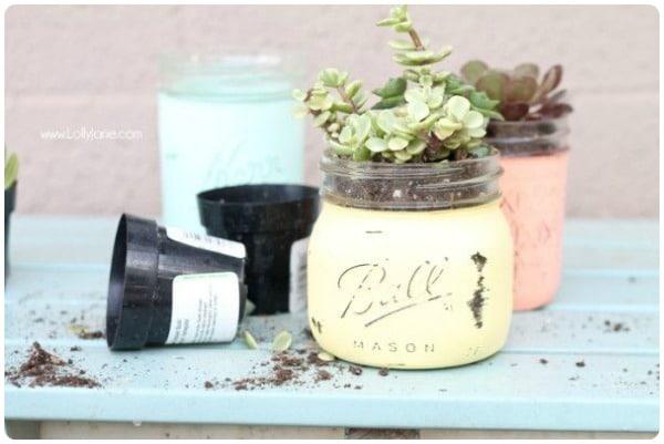 mason jar potted plants