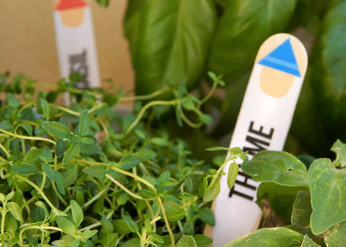 Grow A Container Garden + Gnome Plant Markers