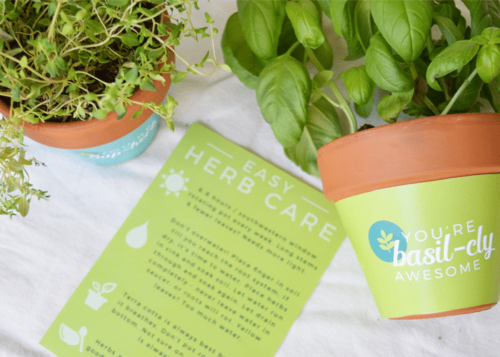 Free Printable Terra Cotta Plant Wrappers