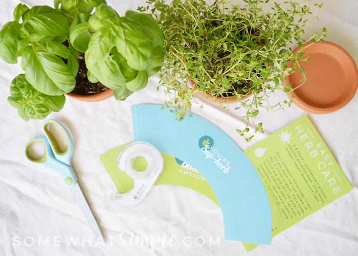 plant pot wrapper supplies