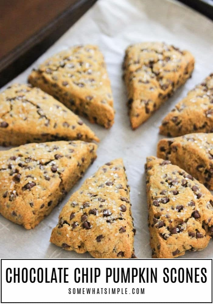 Pumpkin Scones are packed with flavor and loaded with chocolate chips! They are moist and tender and couldn't be any easier to make! #scones #pumpkin #breakfast #easy #brunch #chocolatechip via @somewhatsimple