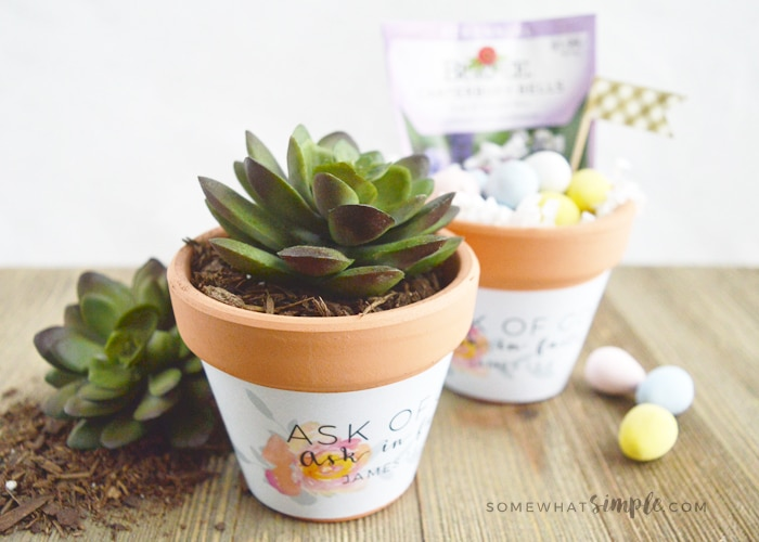 Ask of God Ask in Faith Mini Plant Pot Wrappers
