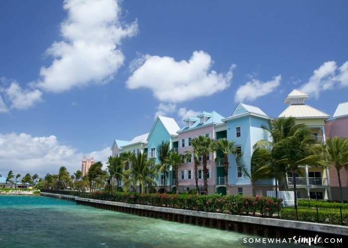 light pink, blue and green houses with a row of palm trees that line the coast in Freeport Bahamas