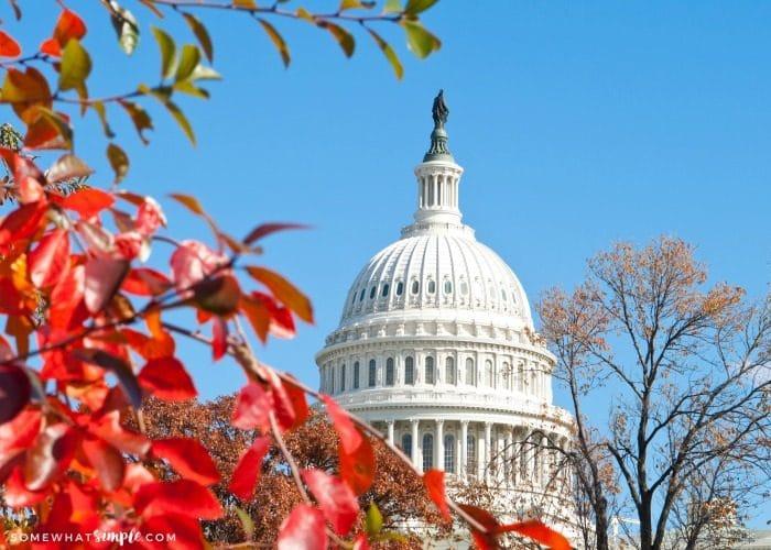 Fall in Washington DC Travel Guide