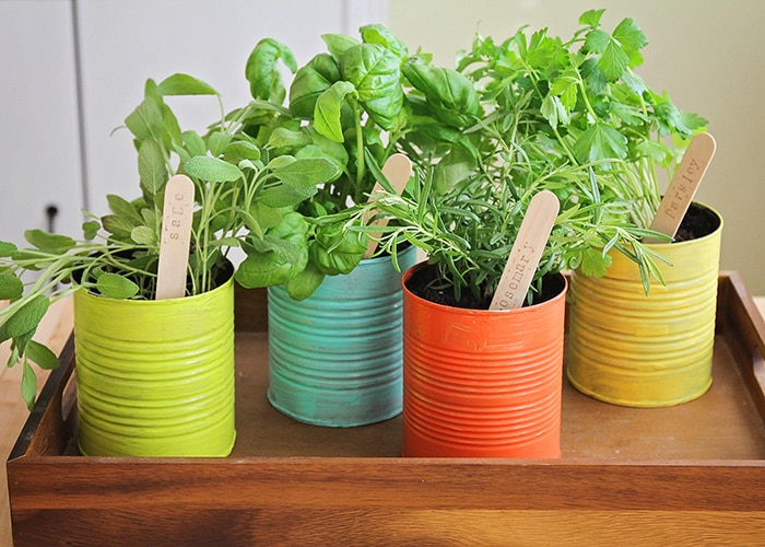 This easy to make indoor herb garden is the perfect project to do with the kids. Add a touch of green to your kitchen and enjoy fresh herbs year round!