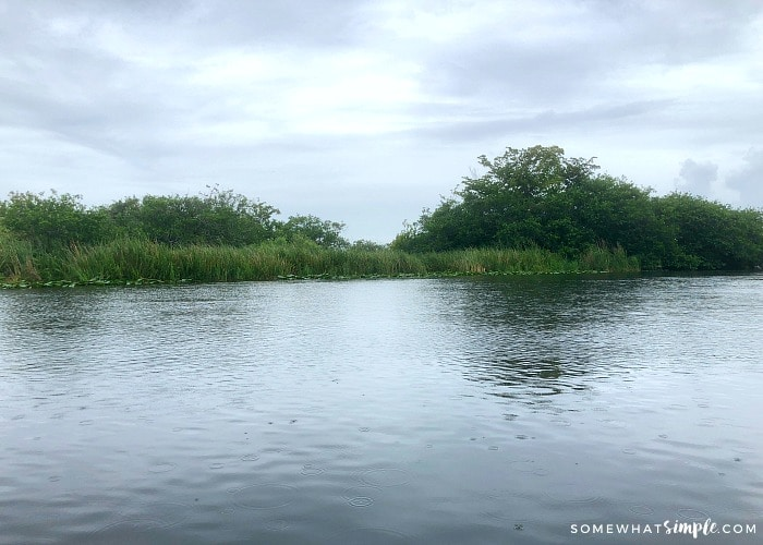 Florida Everglades on a Cruise Excursion