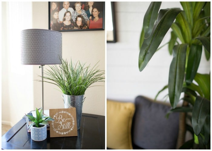 Adding plants to apartment decor