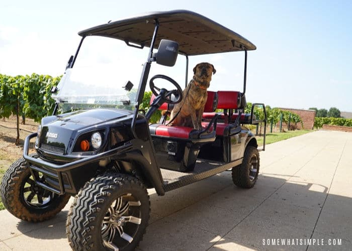 Details of our trip to Dallas and why we were driving golf carts in a vineyard! #ezgo #beyondfun via @somewhatsimple
