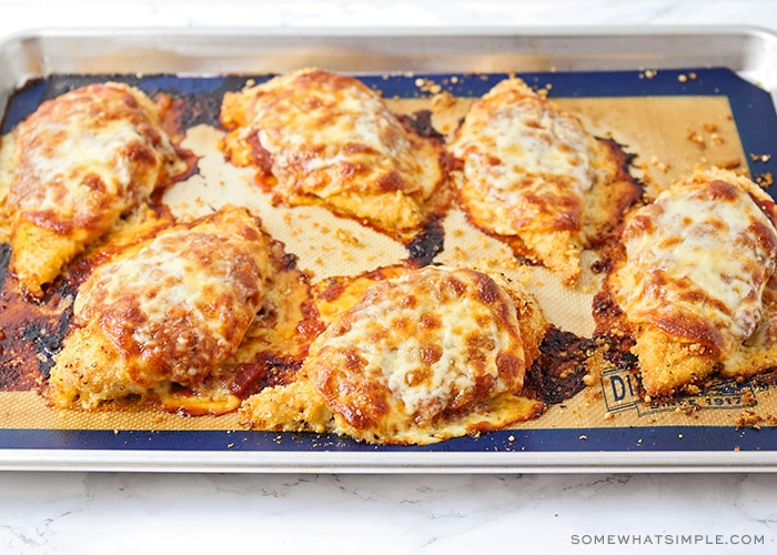 six breasts of chicken premesan with melted cheese on a baking sheet that were returned to the oven to melt the cheese and warm the marinara sauce