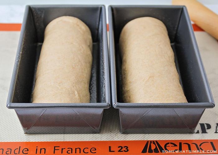 raw dough in bread pans
