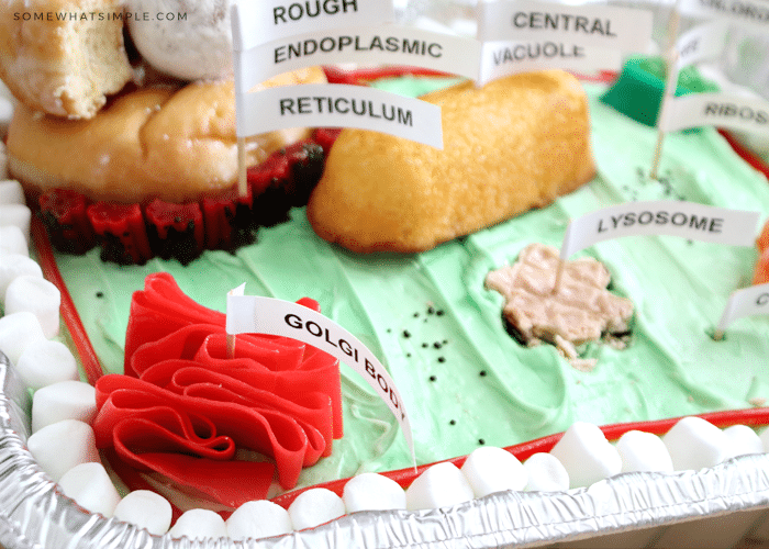 an edible plant cell project idea