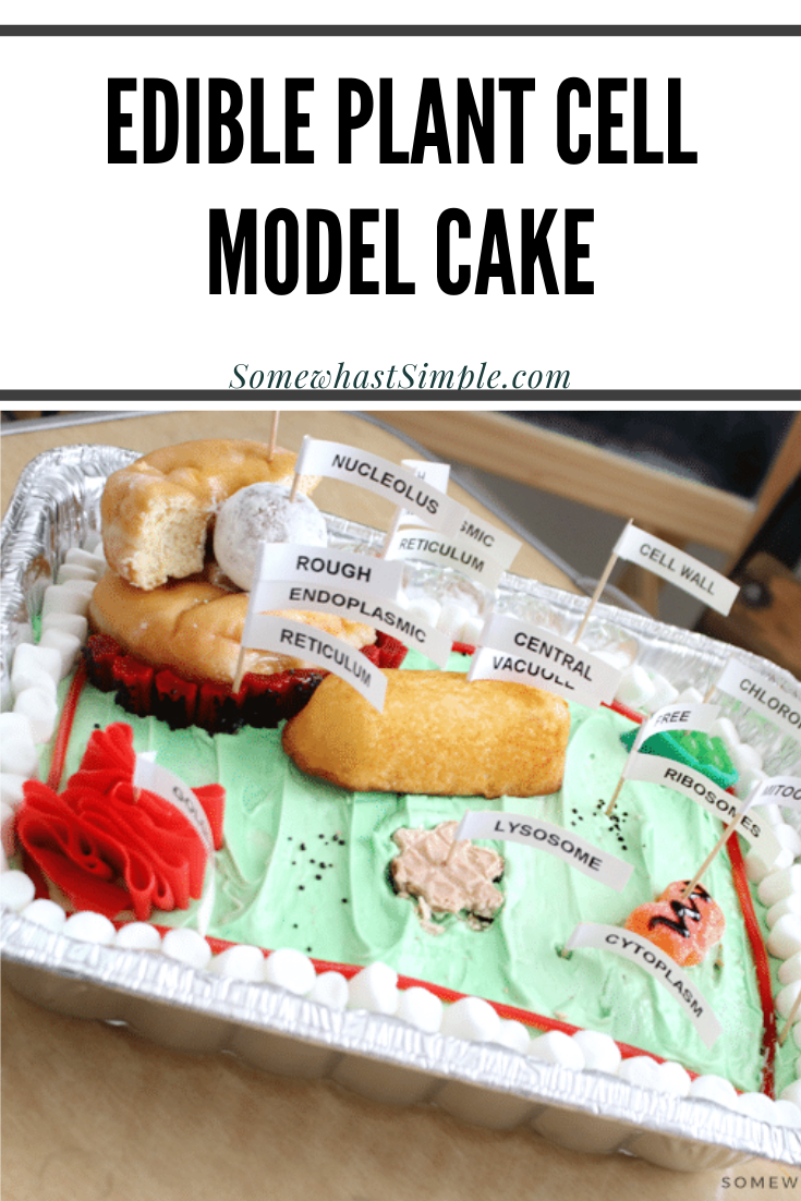 Making a plant cell model is a great way to have some fun with your kids in the kitchen! A fun, edible science project that's both educational and tasty! This 3D plant cell model cake is a fun way to learn all of the parts of a plant's cell. Plus, it comes with free printable labels so you can easily mark each part of the cell. via @somewhatsimple
