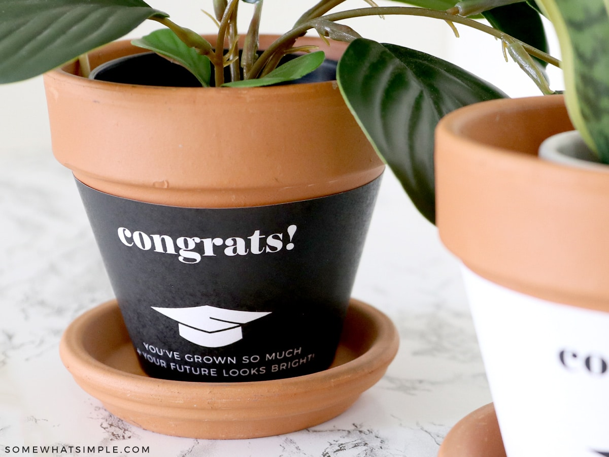 potted plant with a money bow tie
