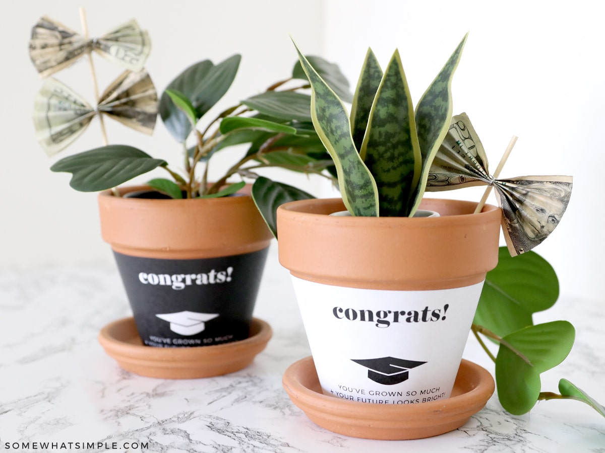 graduation gift with plant and money