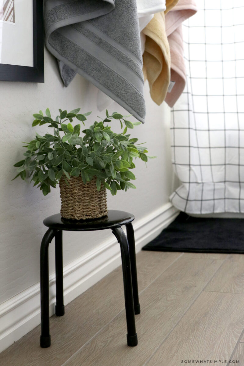 small plant on black stool